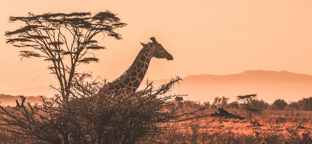 Spelbolag på nätet – nu också i Afrika